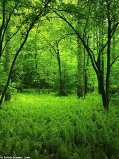 Forest Mobile Wallpaper