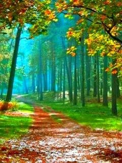Lovely Autumn Road Mobile Wallpaper