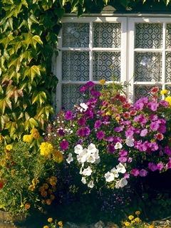 Window Flowers Mobile Wallpaper