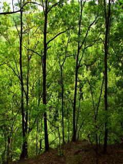 Forest Nature Mobile Wallpaper