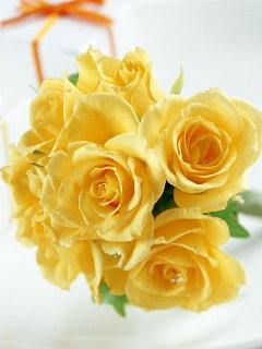 Yellow Roses Mobile Wallpaper