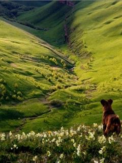 Dog On Green Nature Mobile Wallpaper