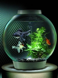 Aquarium Mobile Wallpaper