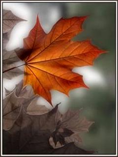 Leaf Mobile Wallpaper