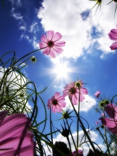 Sunshine And Flowers Mobile Wallpaper
