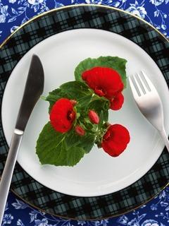 Eat Flowers Mobile Wallpaper