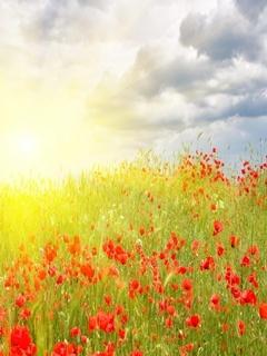Poppies Sun Mobile Wallpaper