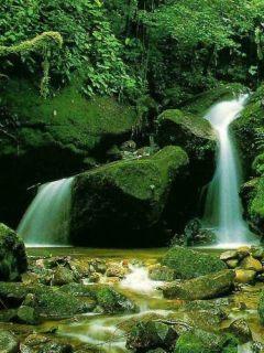 Green Nature Falls Mobile Wallpaper