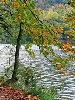 River Autumn Tree Mobile Wallpaper