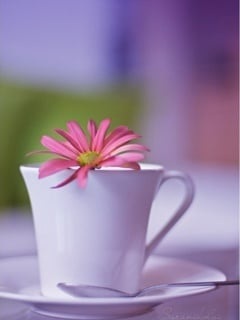 Flower In Cup Mobile Wallpaper