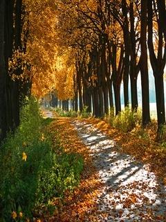Autumn Road View Mobile Wallpaper