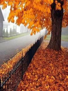 Autumn Stroll Mobile Wallpaper
