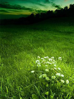 Cute Green Grass Mobile Wallpaper
