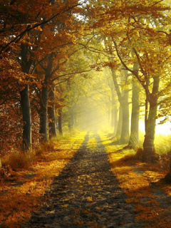Autumn Nature Road Mobile Wallpaper