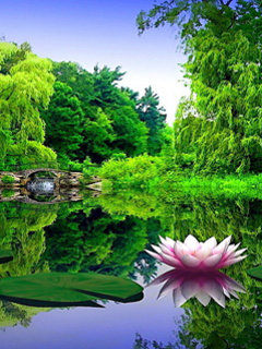Awesome Green Nature Mobile Wallpaper