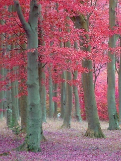 Pink Forest Mobile Wallpaper