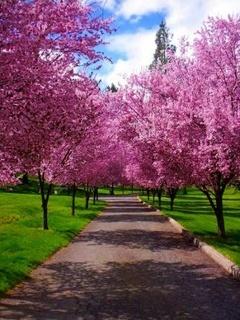 Spring Path Mobile Wallpaper
