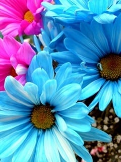 Nice Colors Flowers Mobile Wallpaper
