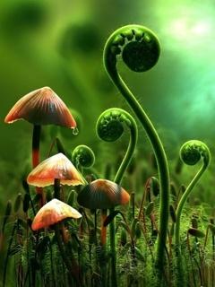 Mushroom Mobile Wallpaper