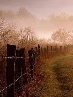 Foggy Morning Mobile Wallpaper