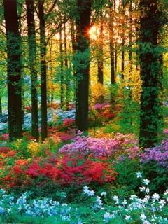 Flower Forest Barbados Mobile Wallpaper