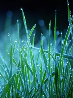 Green Nature Grass Mobile Wallpaper