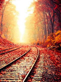Autumn Nature Track Mobile Wallpaper