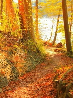 Autumn Colors Mobile Wallpaper