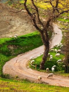 Lovely Tuscany Road Mobile Wallpaper