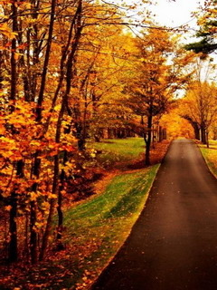 download new england autumn fall mobile wallpaper mobile toones