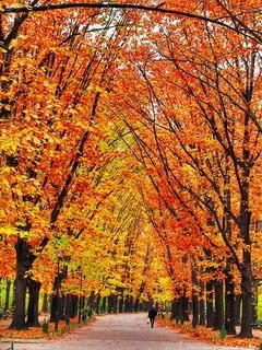Bucharest Autumn Mobile Wallpaper