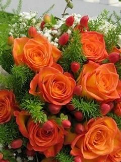 Roses For U Mobile Wallpaper