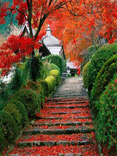 Red Leaves Steps Mobile Wallpaper