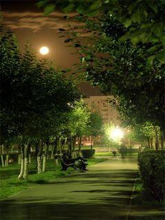 Night Park Mobile Wallpaper