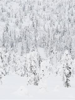 White Snow Mobile Wallpaper