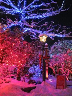 Lights N Winter Mobile Wallpaper