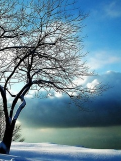 Winter Nature Mobile Wallpaper