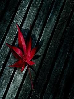 Red Leaf Mobile Wallpaper