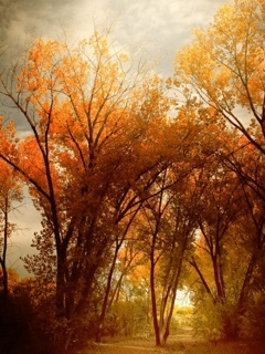 Fall Scenery Mobile Wallpaper