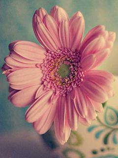 Beautiful Pink Flower Mobile Wallpaper