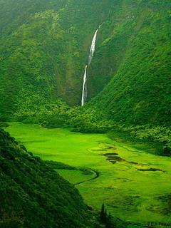 Waimanu Valley Hawaii Mobile Wallpaper