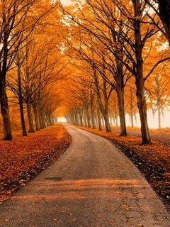 Autumn Road Mobile Wallpaper
