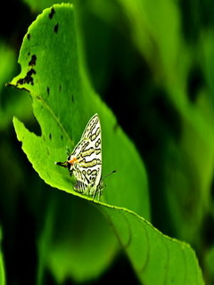 Butterfly On Green Mobile Wallpaper