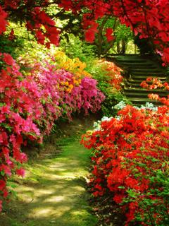 Garden Flowers Mobile Wallpaper
