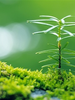 Nice Green Leaf Mobile Wallpaper