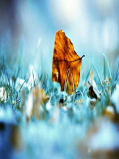 Alone Fall Leaf Mobile Wallpaper