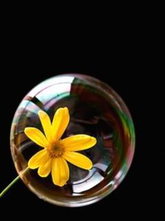 Flower Inside Bubble Mobile Wallpaper