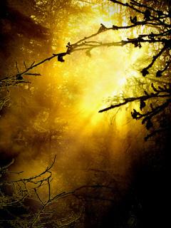 Sunlight In Forest Mobile Wallpaper