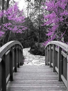 Bridge Beauty Color Mobile Wallpaper