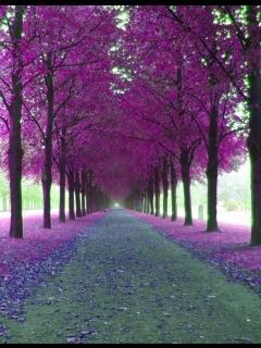 Purple Avenue Mobile Wallpaper